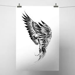 Parakeet White Background.jpg