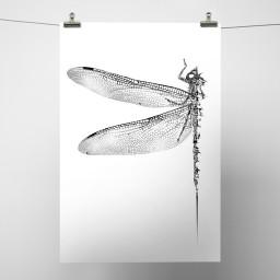 Dragonfly_White Background.jpg