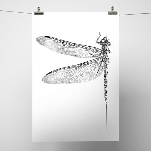 Dragonfly_White Background.jpg